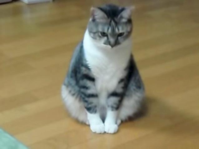 ショボーンとする猫