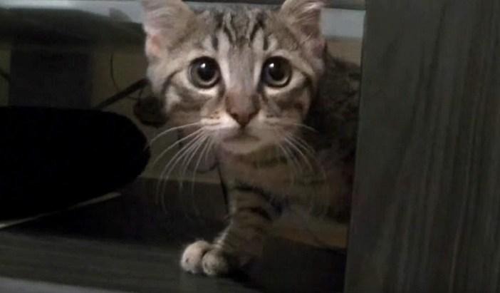 物陰から出て来る子猫