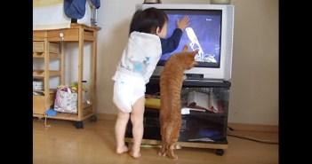 テレビを見る猫と男の子