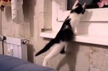 足が届かない子猫