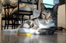 ベルを鳴らして食べ物を要求する猫