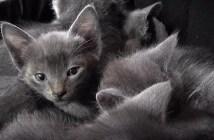 喉を鳴らす猫団子