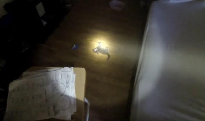 家の中に倒れていた子猫