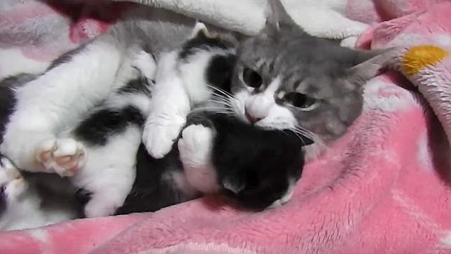 子猫をぎゅっとする母猫