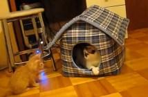 家に入りたい子猫