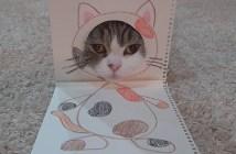 顔ハメ看板な猫