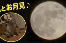 猫とお月見