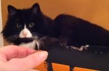 触っちゃダメな猫