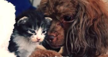 子猫に愛を注ぐ犬