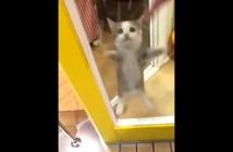 ピョンピョン飛び跳ねる子猫