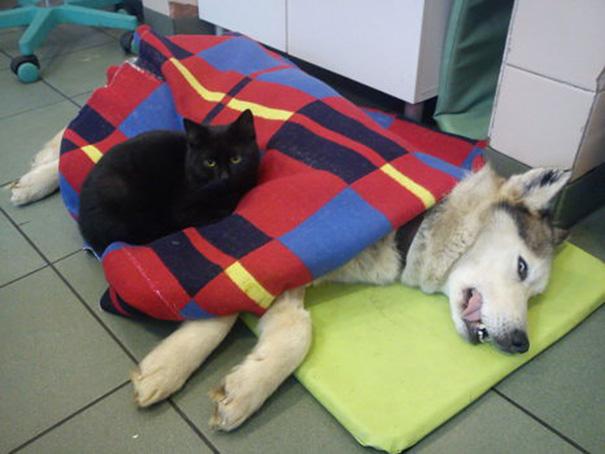 犬を看護する黒猫