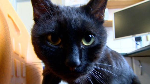 天使の黒猫