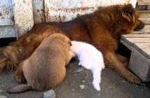 犬の家族にとけ込む猫