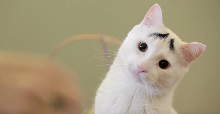 困り顔の猫のサム