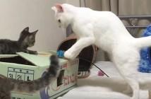 子猫に諦めない心を教えようとする猫