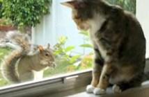 仲良くなって行くリスと猫