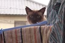 ベランダに侵入した猫