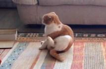 お尻歩きする猫