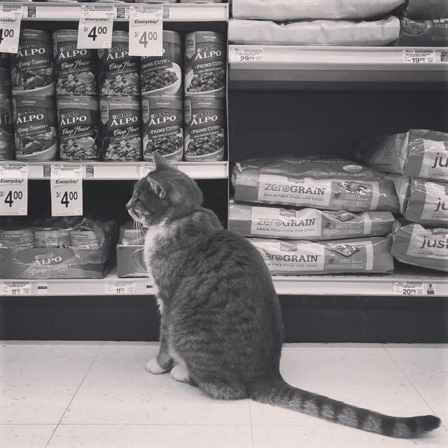 スーパーの店内を見渡す猫