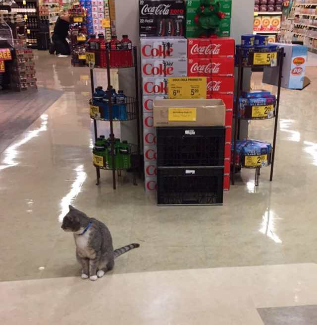 スーパーの店内を散歩する猫