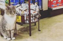 スーパーの看板猫