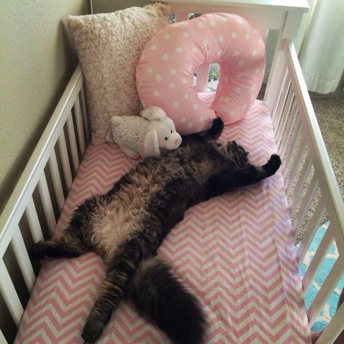 ベビーベッドを存分に味わう猫