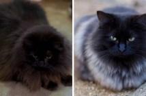 毛の色が変化した猫