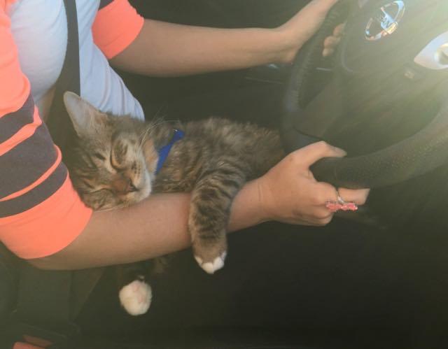 運転手さんの手に掴まって眠る猫