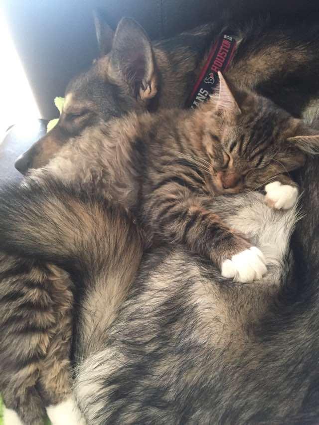 抱き合う犬と猫