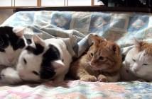 コタツから出ない猫