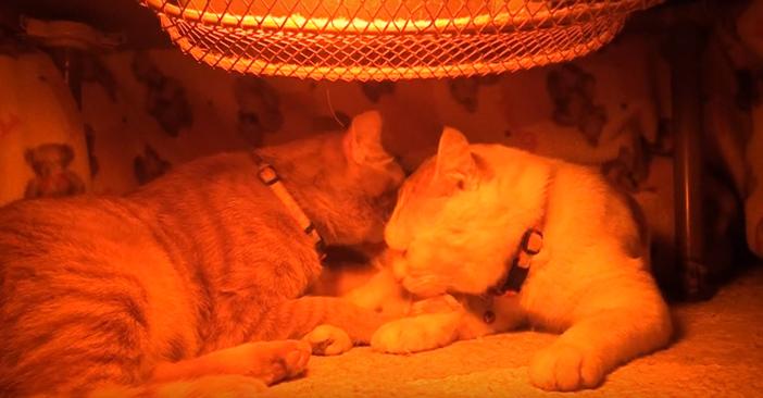 二匹でくつろぐ猫
