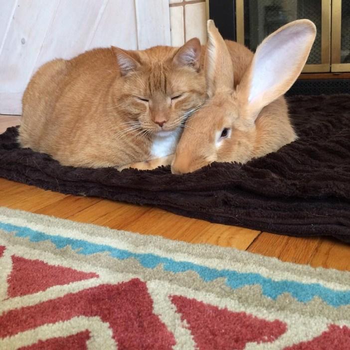 一緒に眠る猫とうさぎ
