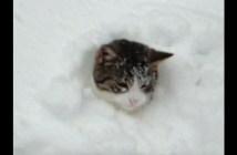 雪の中でハシャグ猫