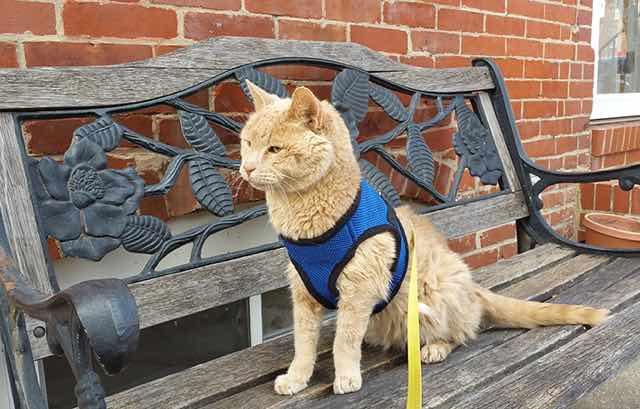 旅先のベンチで座る猫