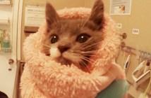 24時間猫の世話