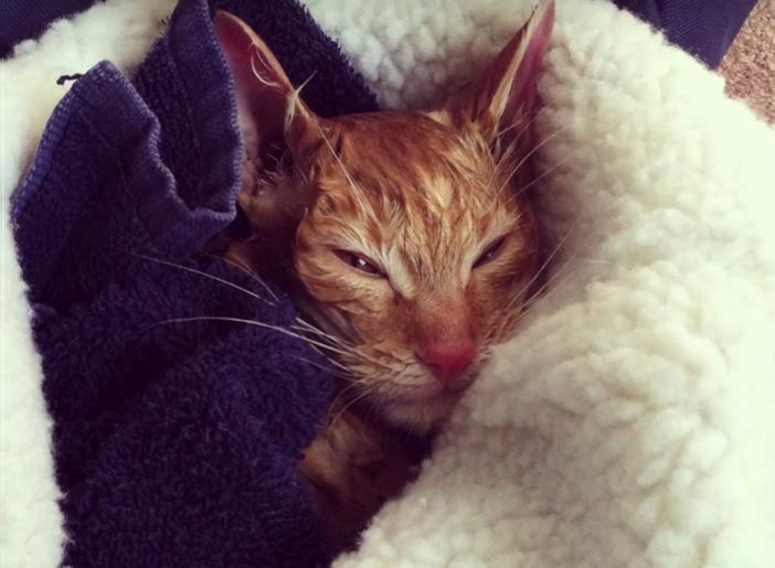 身体を温める猫