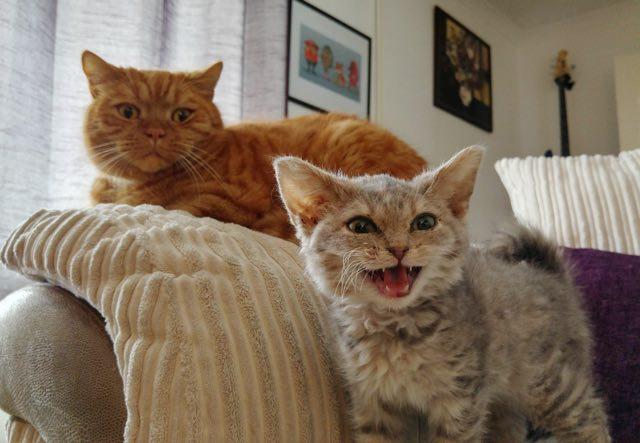 ふたりいっしょの猫
