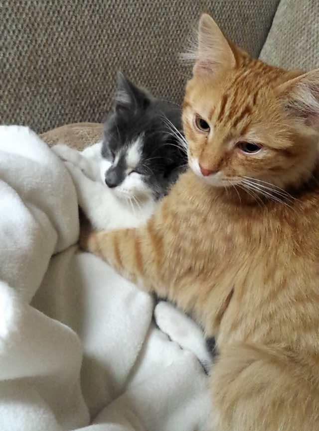 抱きしめる大人猫
