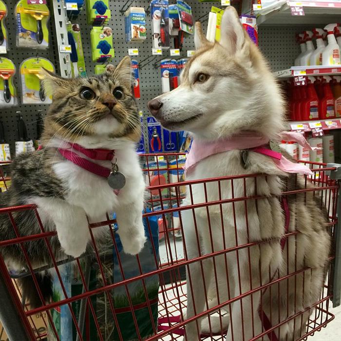 いっしょにショッピングを楽しむ犬と猫