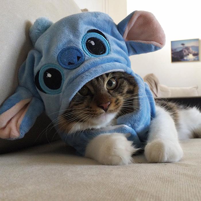 かぶり物を被る猫