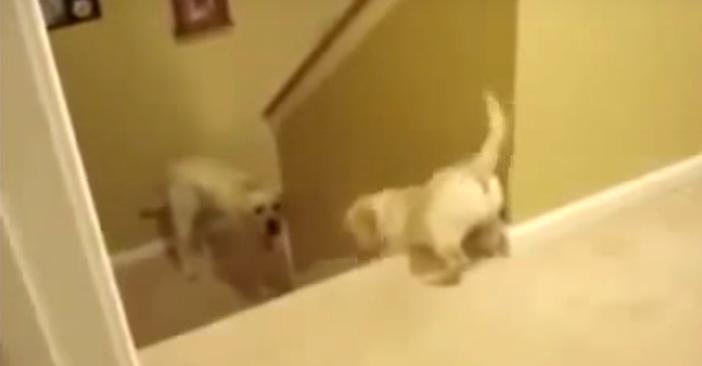 階段を下りる練習