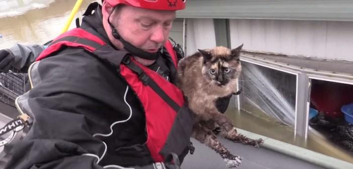 救出される猫