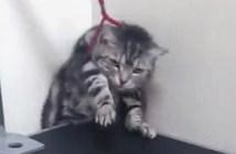 診察台から抜け出す猫