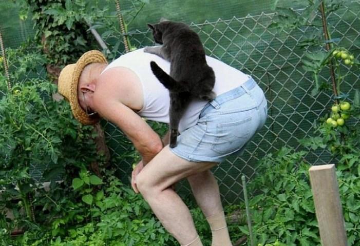 おじいちゃんに登る猫