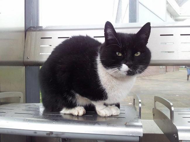 ベンチに座る猫