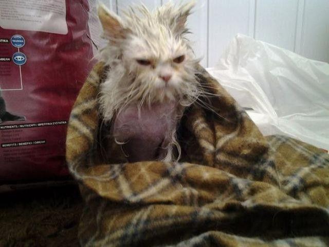 身体の毛を剃られた猫