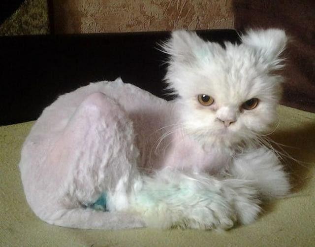毛が少しずつ生えてきた猫