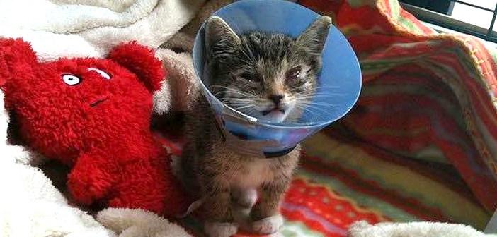 目の悪い猫を保護