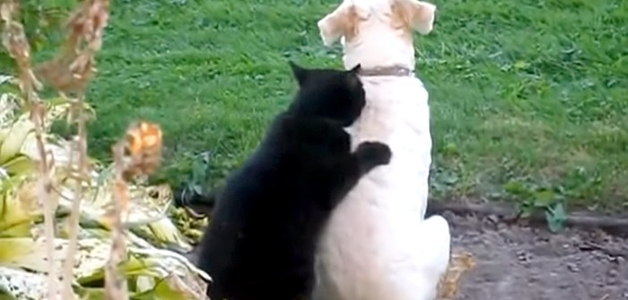 犬を元気づける猫