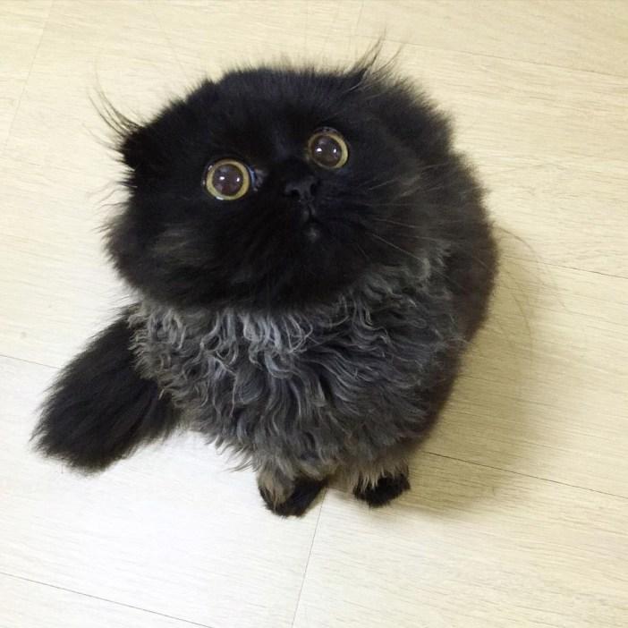 見上げる黒猫